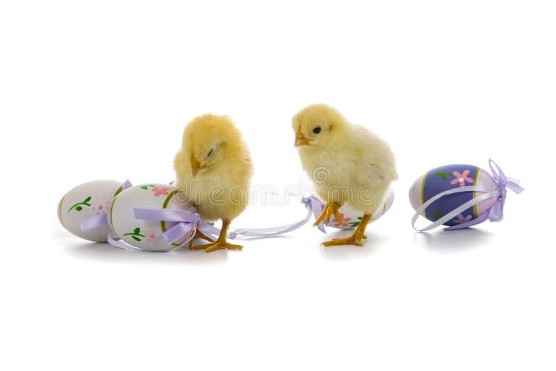 Poulets et oeufs de pâques jaunes image stock