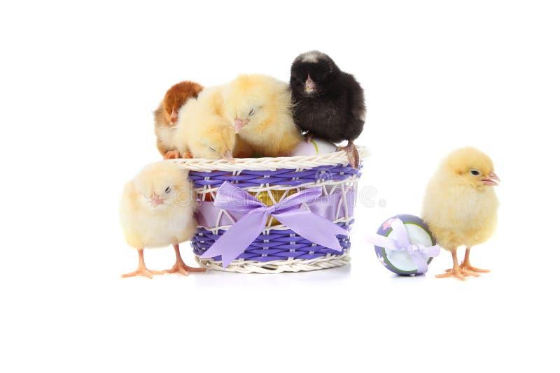 Poulets et oeufs de pâques jaunes photographie stock