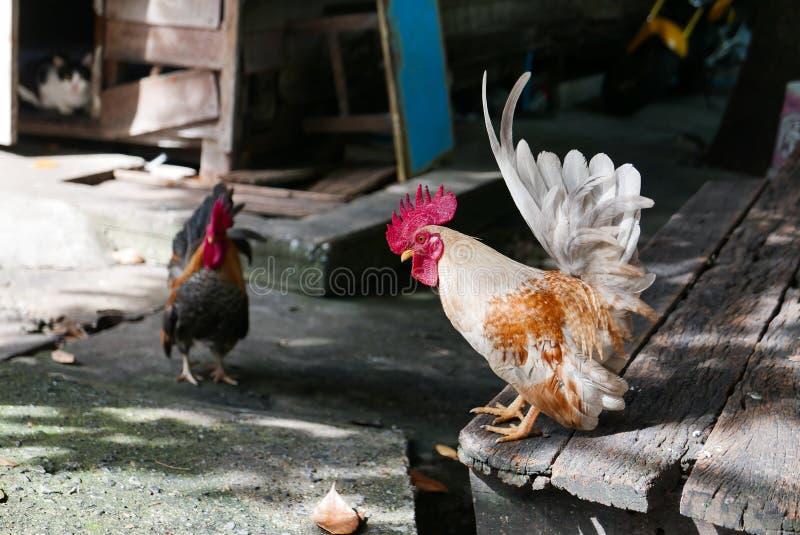 Poulets petits mignons photographie stock libre de droits