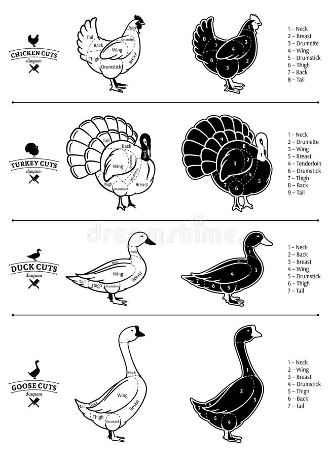 Poultry Cuts Diagrams. Vector cuts of chicken, turkey, duck and goose diagrams royalty free illustration
