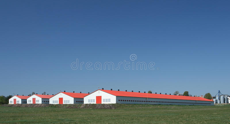 Poultry farm stock photography
