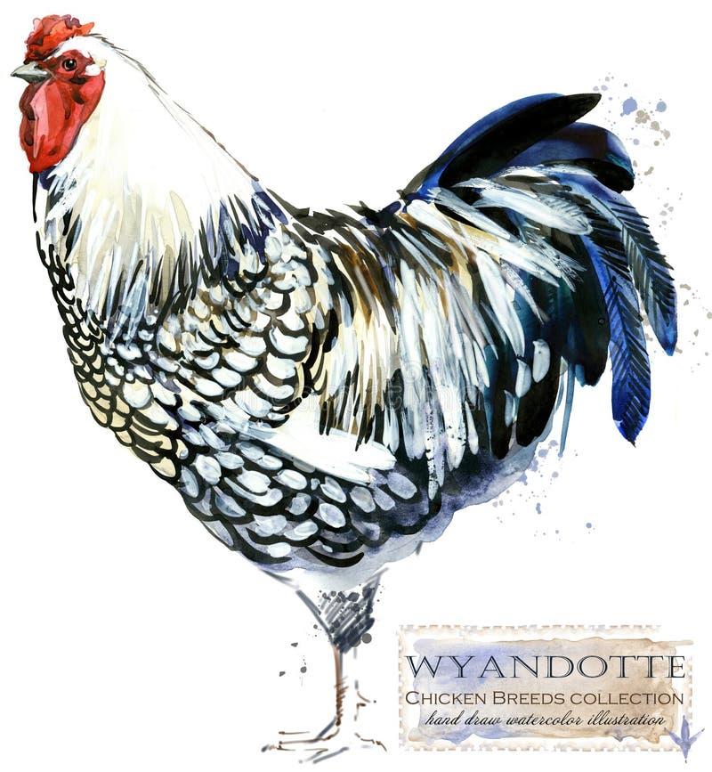 Poultry farming. Chicken breeds series. domestic farm bird watercolor illustration. stock illustration