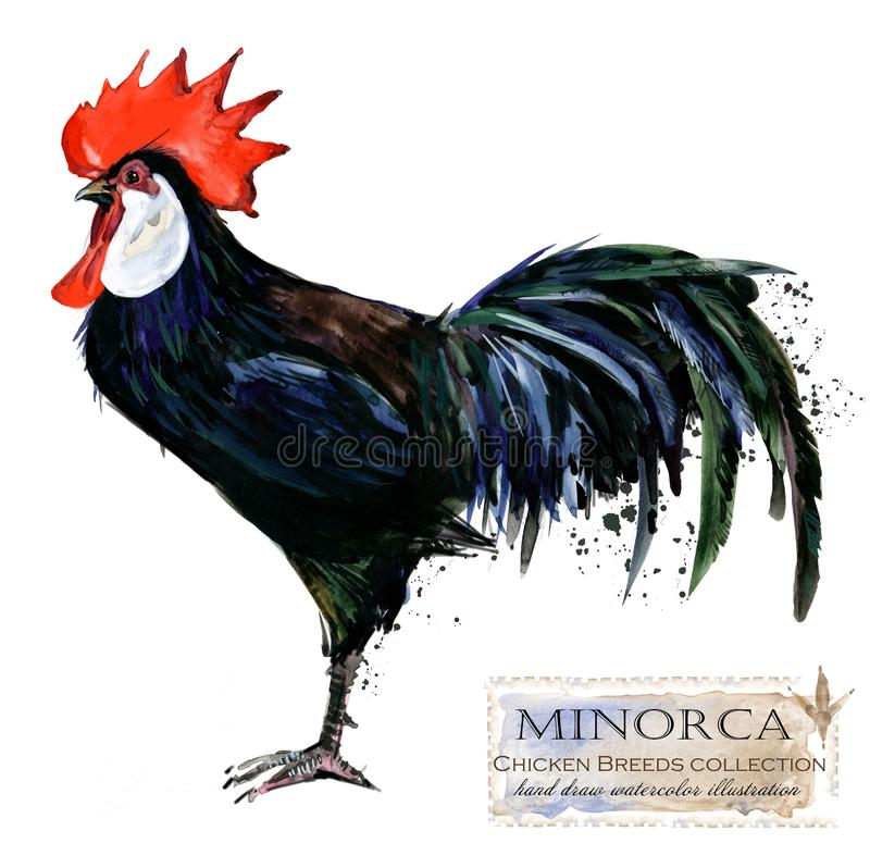 Poultry farming. Chicken breeds series. domestic farm bird stock illustration