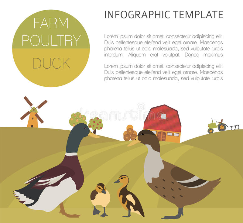 Poultry farming. Duck family isolated on white. Flat design. Vector illustration royalty free illustration