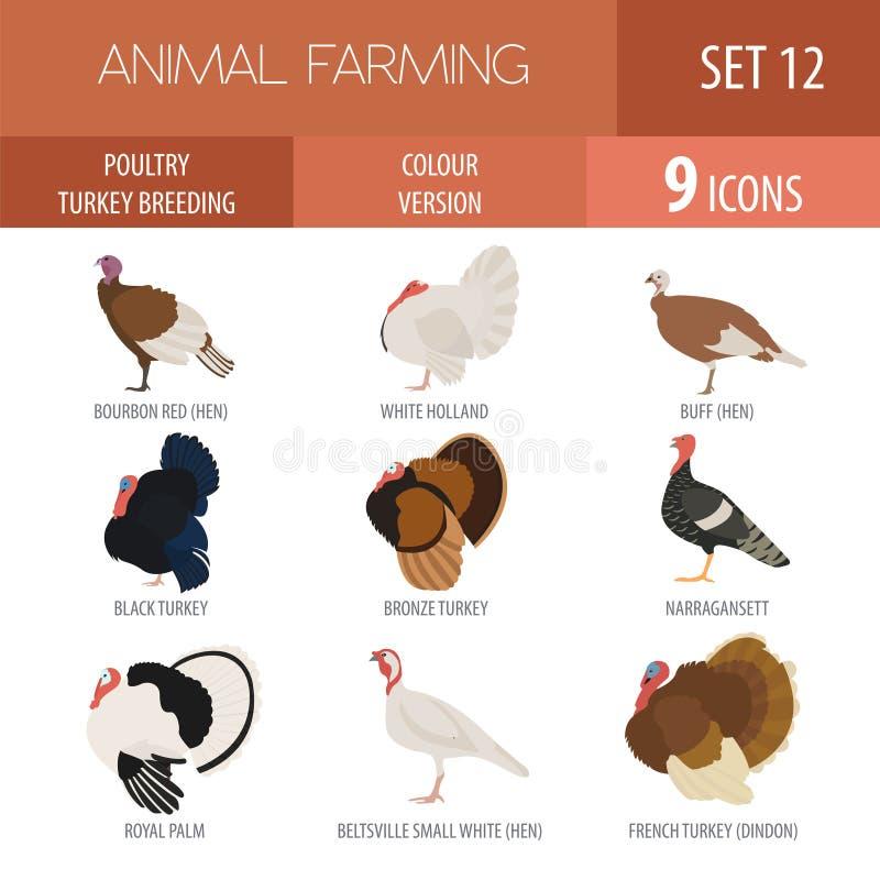 Poultry farming. Turkey breeds icon set. Flat design royalty free illustration