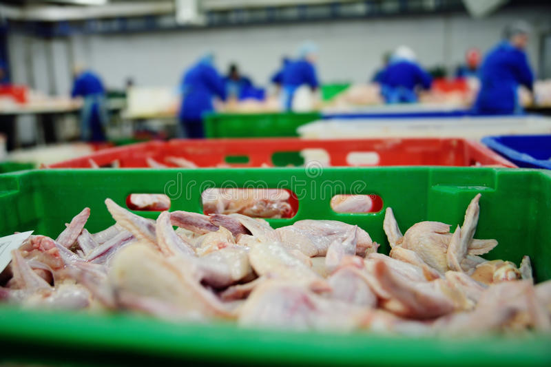 Poultry processing in food industry stock photography