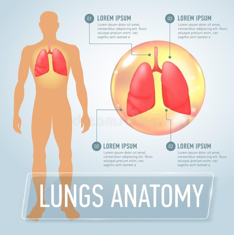 poumon Infographics médical moderne Organes internes à un corps humain Anatomie des personnes illustration libre de droits