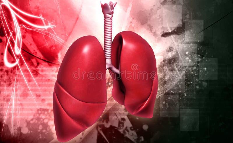 Poumons illustration libre de droits