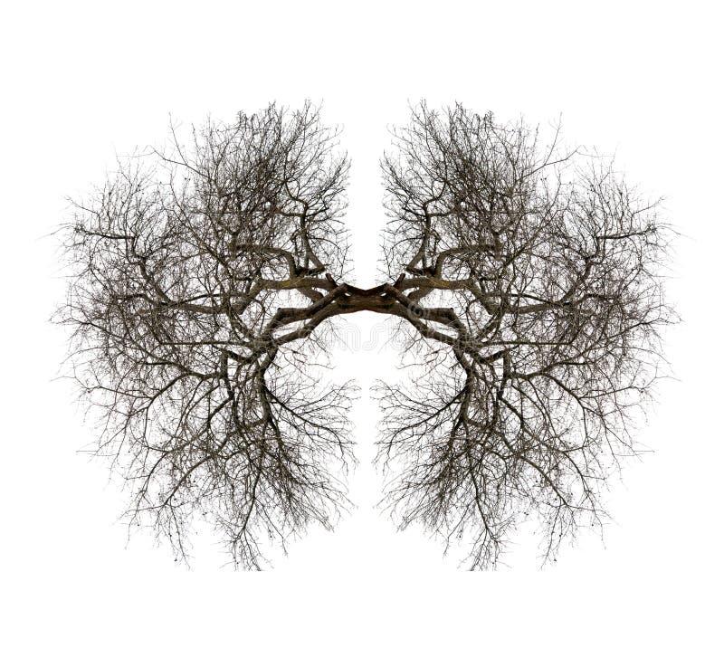 Poumons d'arbre images stock
