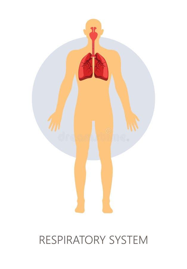Poumons et trachée de respiration normaux d'appareil respiratoire avec des cavités de la NASA illustration stock
