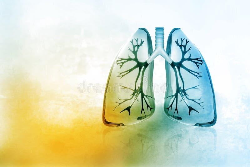 Poumons humains illustration stock