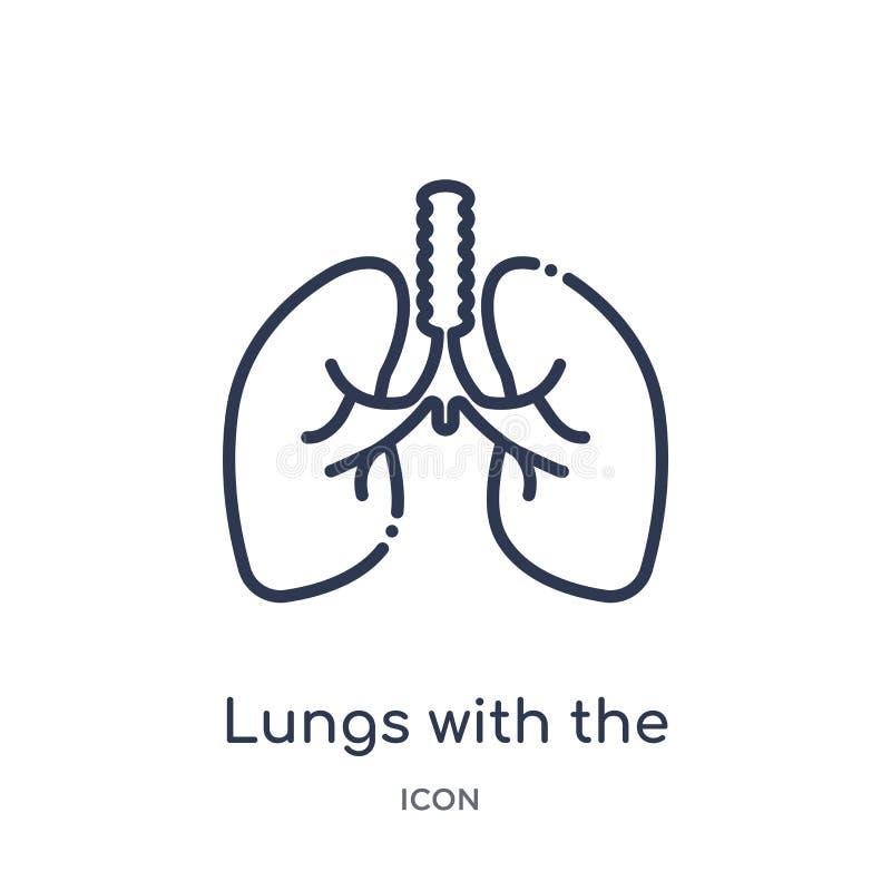 Poumons linéaires avec l'icône de trachée de la collection d'ensemble de pièces de corps humain Ligne mince poumons avec l'icône  illustration de vecteur