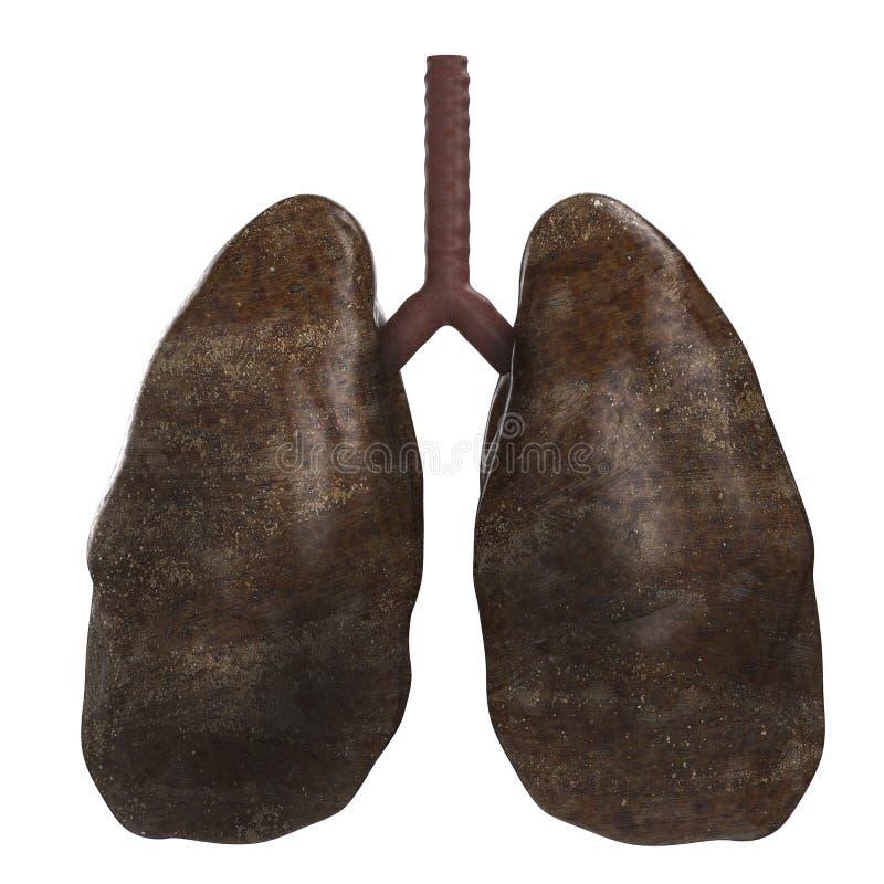 Poumons noirs photos libres de droits
