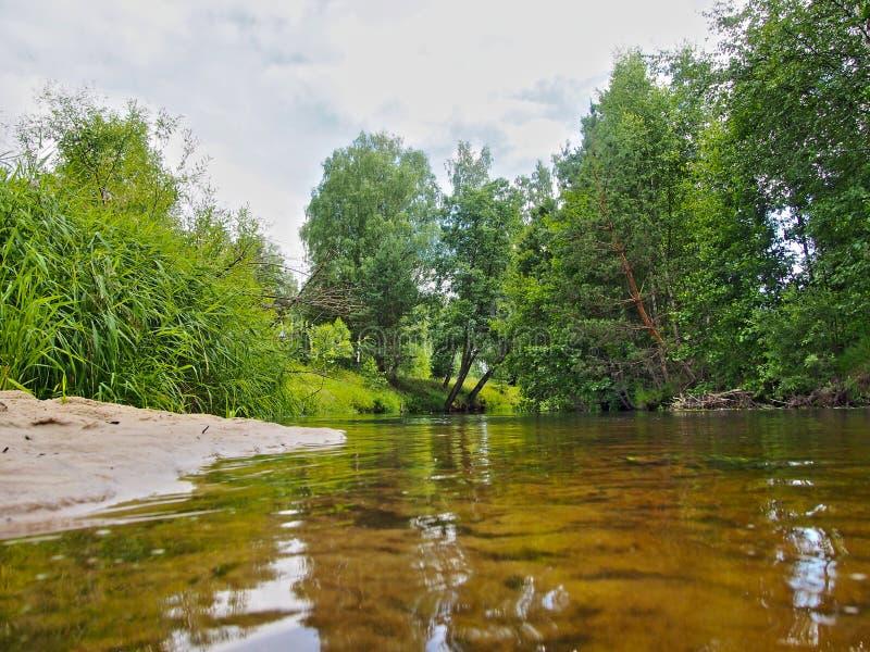 Pour une petite rivière de forêt photographie stock libre de droits