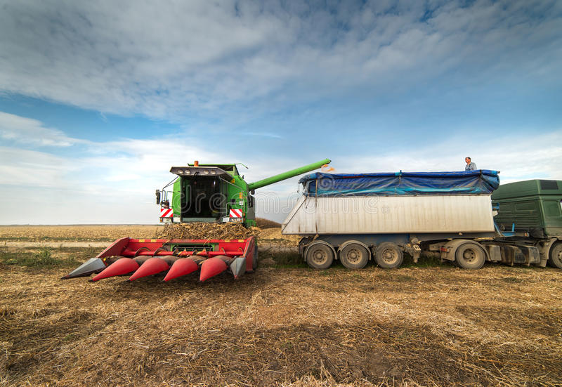 Pouring corn grain into tractor trailer. After harvest royalty free stock photography