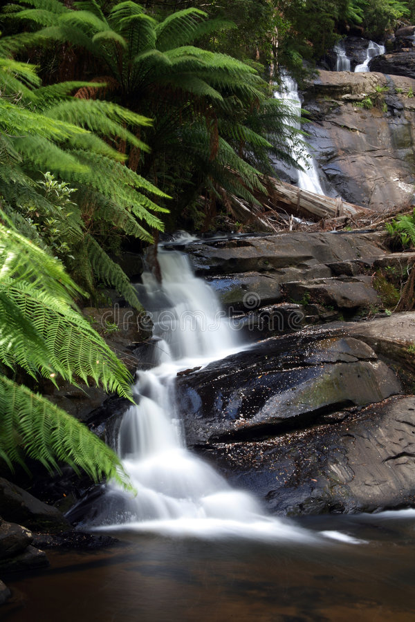 Download Pouring down stock image. Image of rainforest, flowing - 5218043