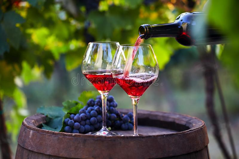 Pouring red wine into glasses. In the vineyard royalty free stock images