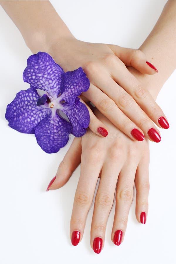 pourpre d'orchidée de manucure de mains photos libres de droits