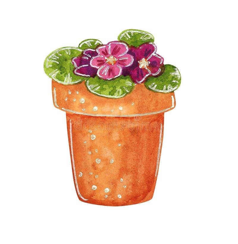 Pourpre et alto rose dans un pot d'argile, illustration tirée par la main d'aquarelle illustration de vecteur