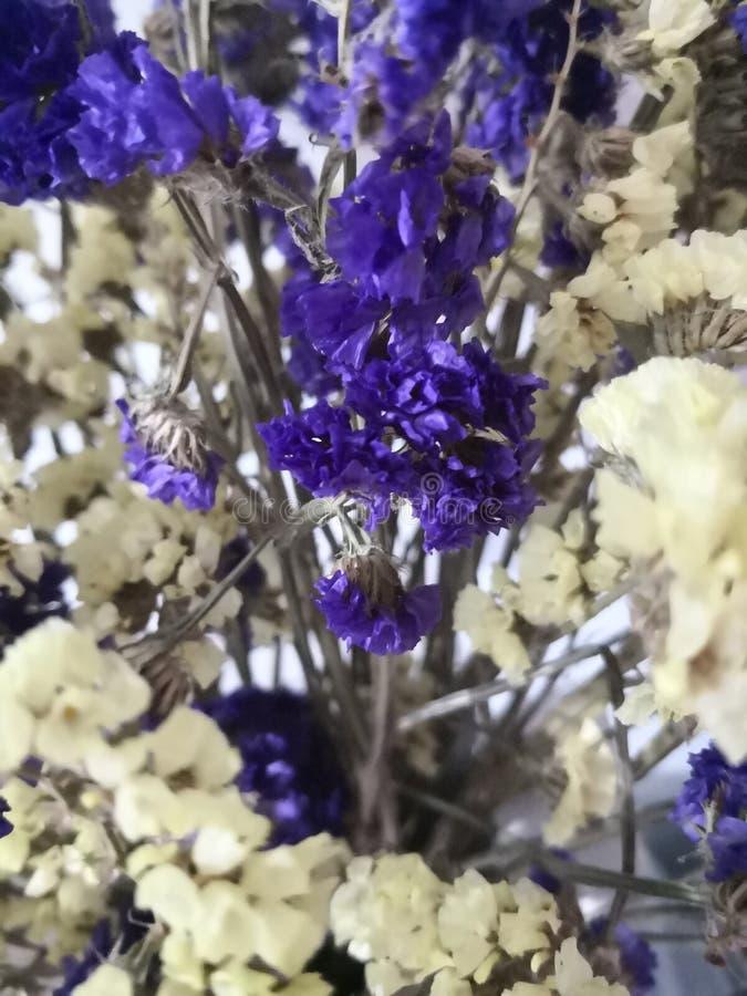 Pourpre et fleurs jaunes faibles photographie stock