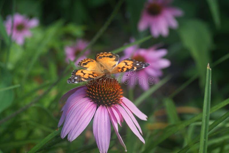 Pourpre orange de vert de fleur de papillon image libre de droits