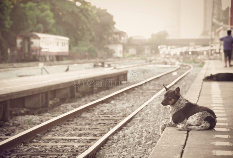 poursuivez attendre son maître à la rétro station de train de vapeur photo stock