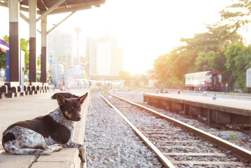 poursuivez attendre son maître à la rétro station de train de vapeur photos stock