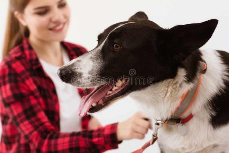 Poursuivez l'obtention vérifiée à la clinique de vétérinaire avec le propriétaire de thir photos libres de droits