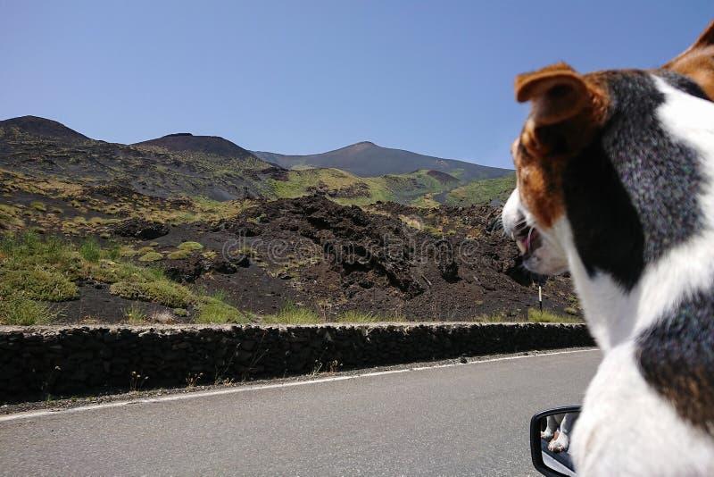 Poursuivez la fenêtre ouverte de regard de la voiture et voyage par la route de apprécier photographie stock libre de droits