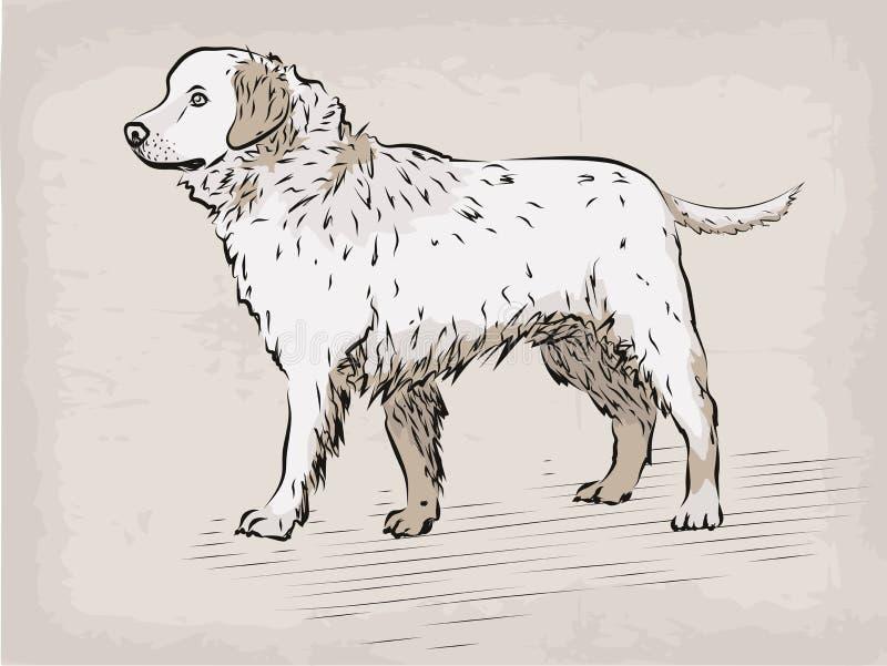 Poursuivez le bel animal familier animal sérieux I tiré par la main de labrador retriever illustration stock