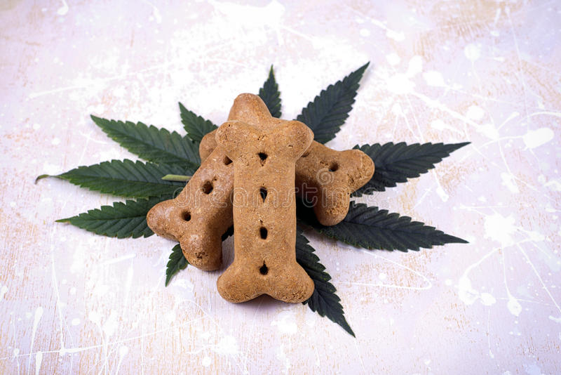 Poursuivez les feuilles de festin et de cannabis - marijuana médicale pour le conce d'animaux familiers images libres de droits