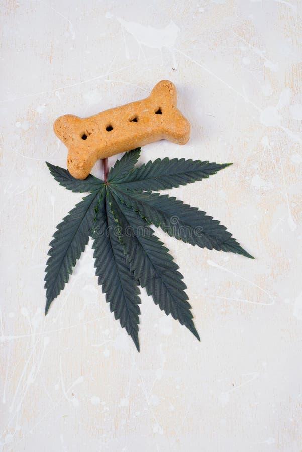 Poursuivez les feuilles de festin et de cannabis - marijuana médicale pour le conce d'animaux familiers photos libres de droits