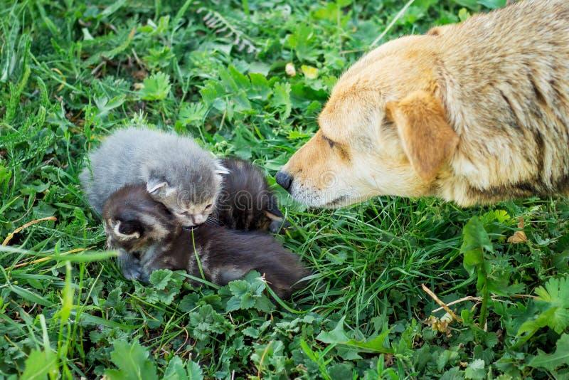 Poursuivez les regards et les reniflements les petits chatons qui se reposent sur l'herbe Nous W images libres de droits