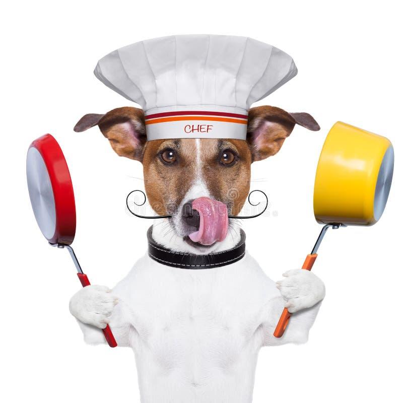 Chef de cuisinier de chien photo stock