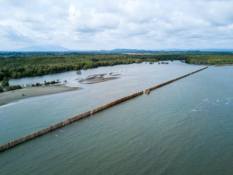 pousse aérienne du poteau en bambou du support de mur de mer sur le palétuvier f image libre de droits