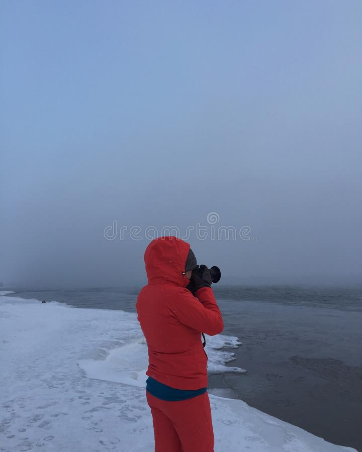 Pousse d'hiver photo stock
