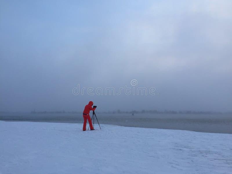 Pousse d'hiver photos libres de droits