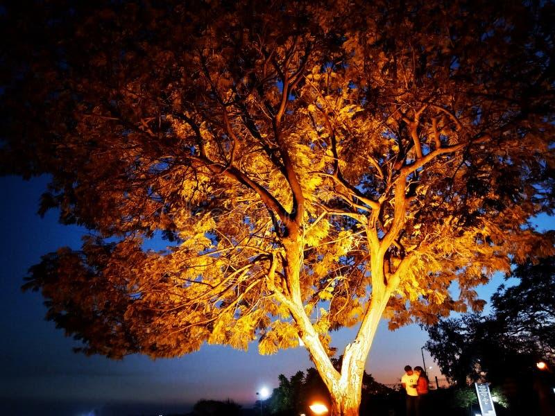 Pousse de nuit de parc de Bhopal photographie stock