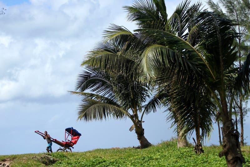 Pousse de Pousse nos tropics fotografia de stock