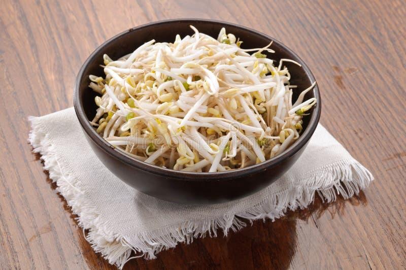 Pousse de soja dans la cuvette images libres de droits