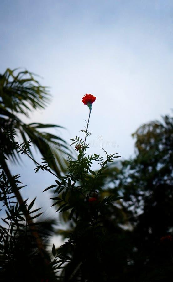 Pousse flower power de fleur image libre de droits