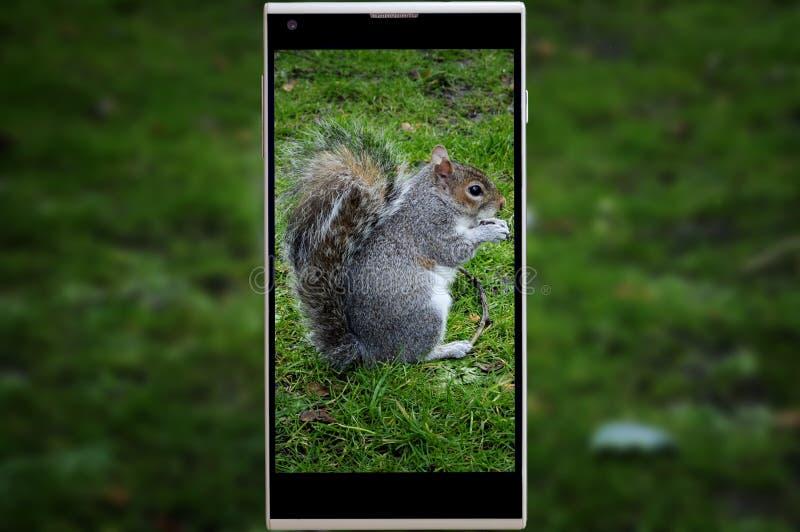 Pousse mobile d'un écureuil photographie stock