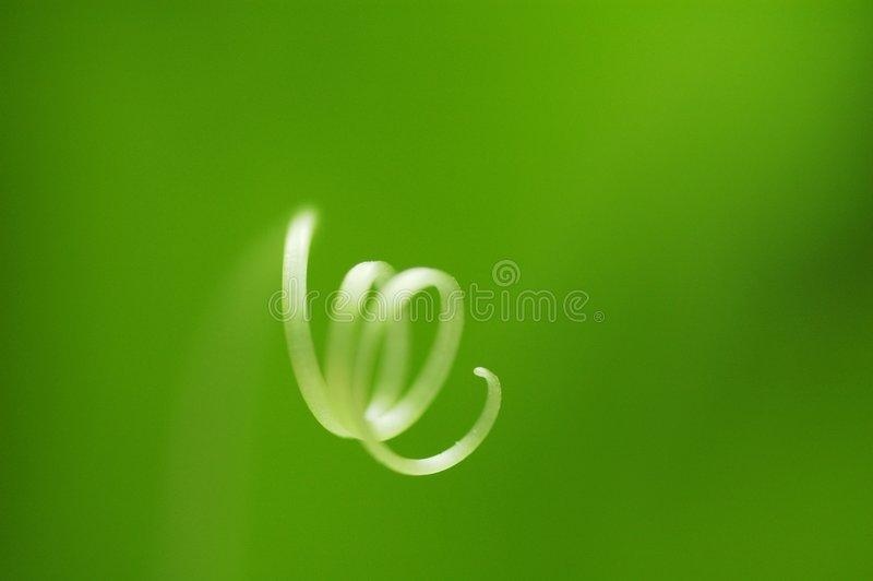 Pousse verte photo stock