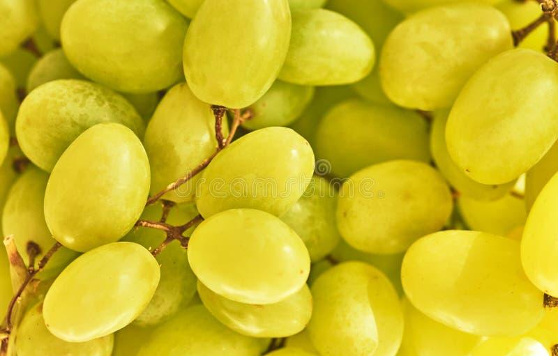 Pousse verte de groupe de raisins d'en haut image libre de droits
