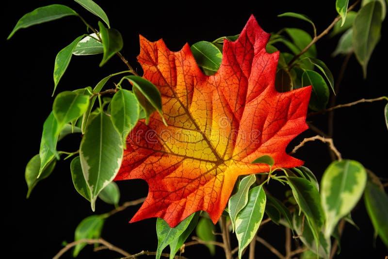 Poussent des feuilles un feuillage photo stock