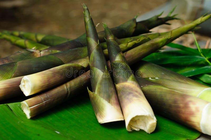 Pousses de bambou vertes sur la banane de feuille images libres de droits