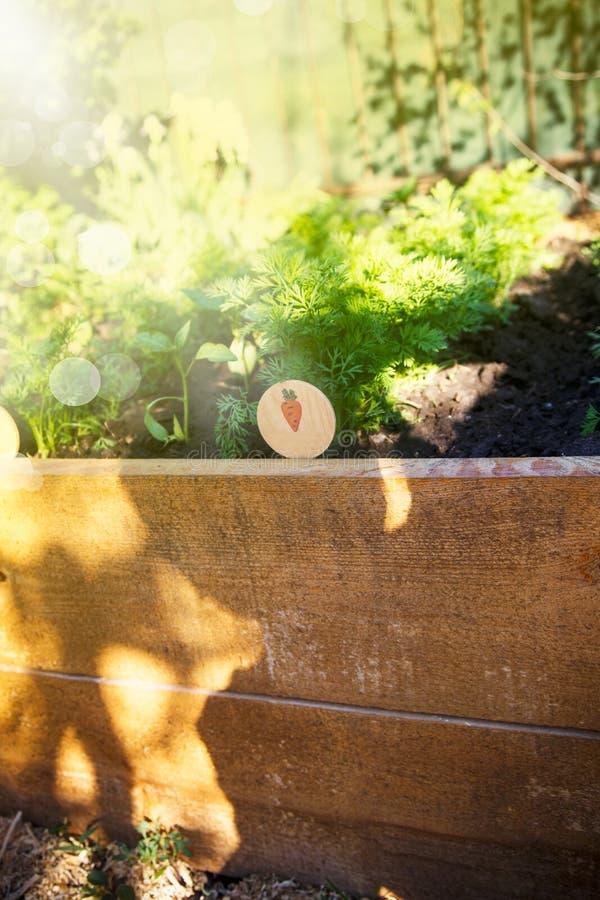 Pousses de carottes un jour ensoleillé photo stock