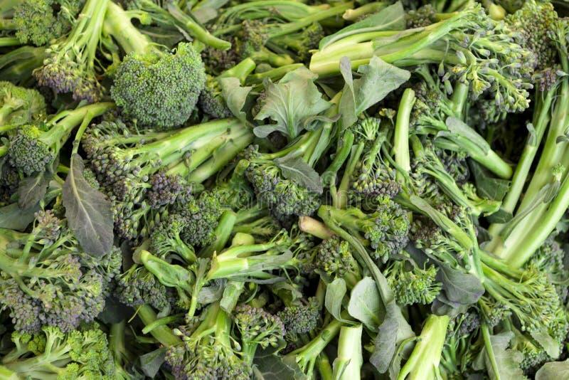 Pousses vertes, fraîches, juteuses de plan rapproché de brocoli Fond de brocoli photos libres de droits
