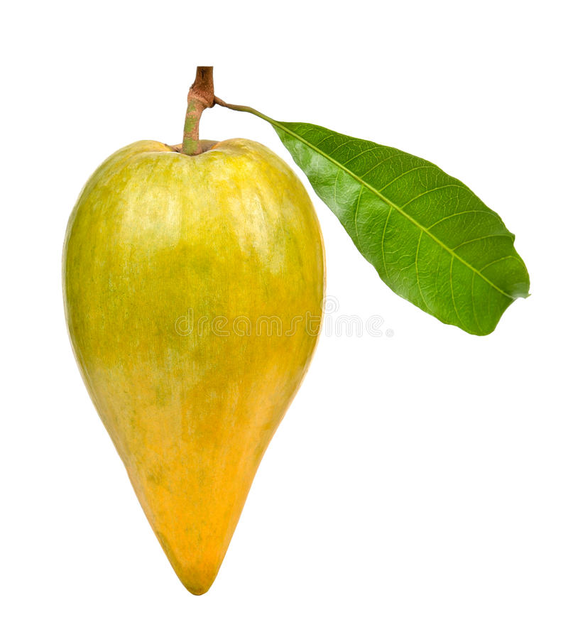 Pouteria campechiana isolated on the white background stock images