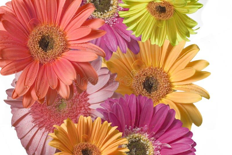 Pouvoir de fleur image stock